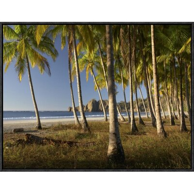 'Palms at Playa Carrillo, Guanacaste, Costa Rica ' Framed Photographic Print on Canvas EAUB5408 38519803