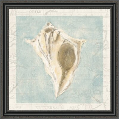 "'Framed Shells III' Framed Print Size: 28"" H x 28"" W x 1.5"" D EUAH2191 39633985"