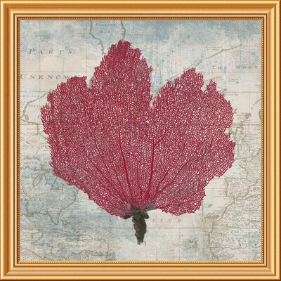 "'Fan Coral' Framed Graphic Art Print on Canvas Size: 28""H x 28""W x 1.5""D EUAH7060 39746765"