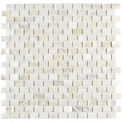 Shore 1 x 1 Seashell Mosaic Wall Tile in White
