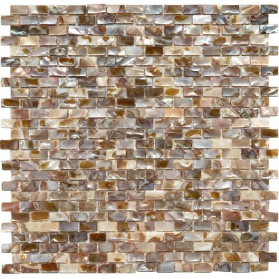 Shore Subway 0.38 x 0.75 Seashell Mosaic Tile in Brown