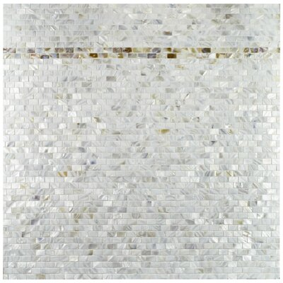 Shore 1 x 1 Seashell Mosaic Wall Tile in White