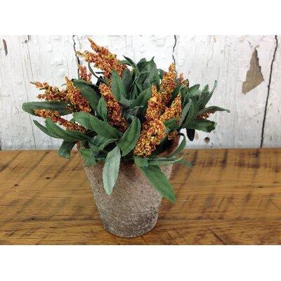 Potted Amaranthus Amber Floral Arrangement (Set of 2)