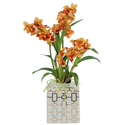 Vanda Orchids Floral Arrangement in Planter SDP224-OR