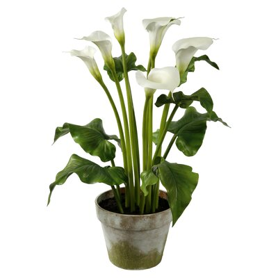 Calla Lily Flower in Pot P4051.WH