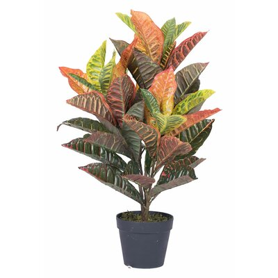 New2 Real Touch Croton Tree in Pot