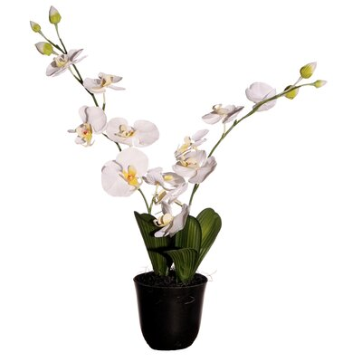 "Vickerman Floral 24"" Artificial Potted Cymbidium Orchids in White and Yellow at Sears.com"