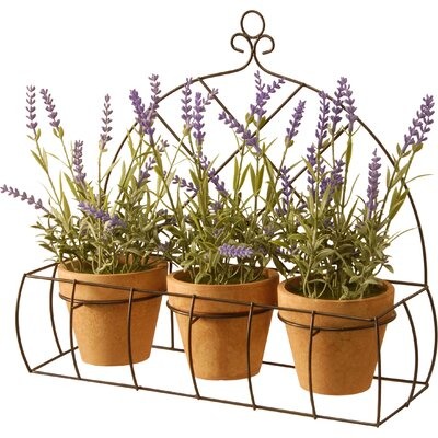 3 Piece Potted Lavender Flower Set with Rack