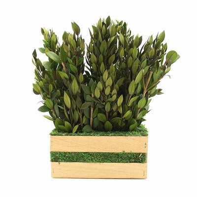 Preserved Myrtle Hedge Foliage Size: 11.5 H x 10.5 W x 5 D