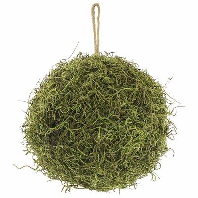 Garden Event Moss Ball Floral Arrangement Size: 8 H x 8 W x 8 D