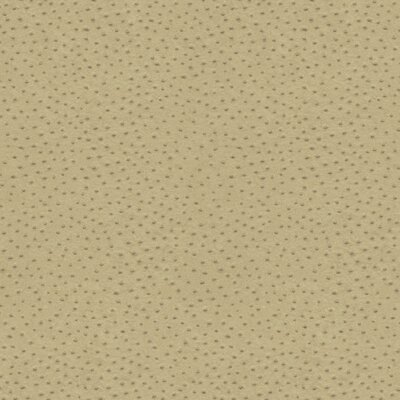 Natural Elements Orstrich 27' x 27 Polka Dot Wallpaper