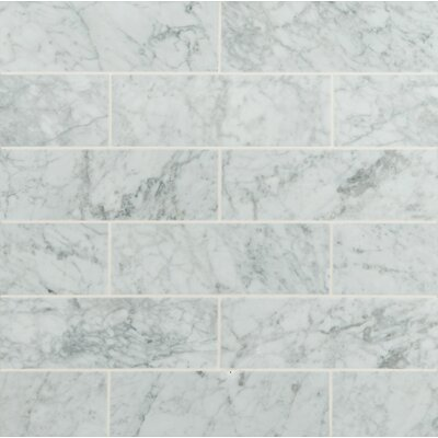 4 x 12 Honed Marble Tile in Arabescato Carrara