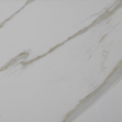 Pietra Calacatta 12 x 12 Porcelain Field Tile in White