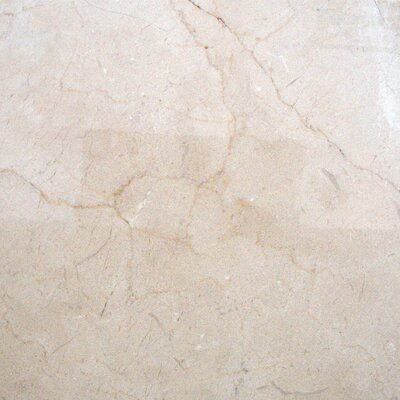 Marfil 12 x 12 Marble Field Tile in Crema