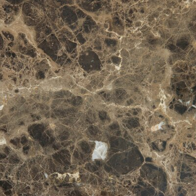 "12"" x 12"" Polished Marble Tile in Emperador Dark"