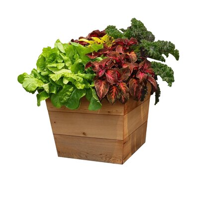 "Patio Cedar Pot Planter Size: 21"" H x 13"" W x 13"" D PP 13-13"