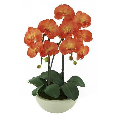Phalaenopsis Orchids Floral Arrangement in Pot OF591-009