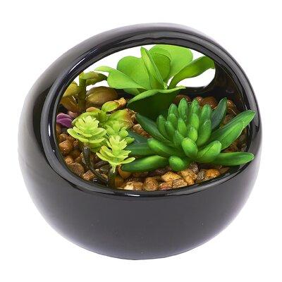 Cactus Desktop Black Base Succulent Plant in Pot