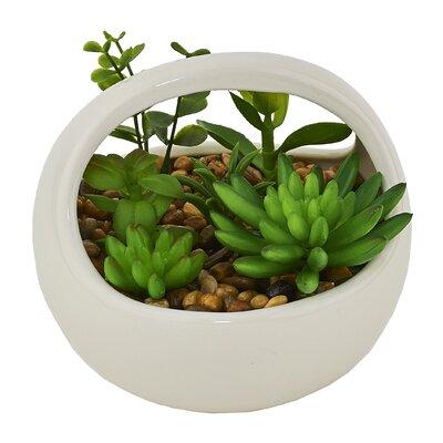 Cactus Desktop Succulent Plant in Pot
