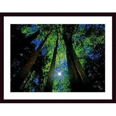 Printfinders 'Forest Canopy' by John K. Nakata Framed Photographic Print - Mat Color: White, Frame Color: Black at Sears.com