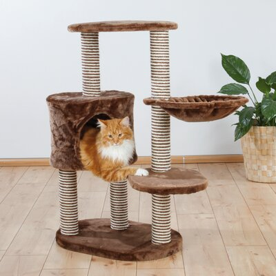 39 Moriles Cat Tree Color: Chocolate Brown