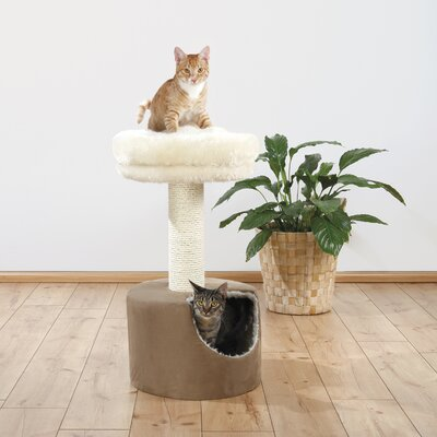31 Elisa Cat Condo