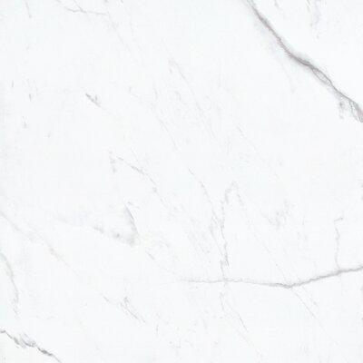 Precious 36 x 36 Porcelain Field Tile in Bianco Oro