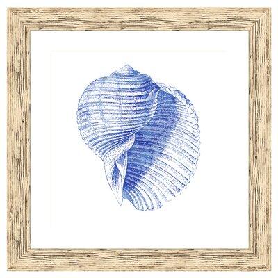 Shell I Framed Graphic Art 1-19907A