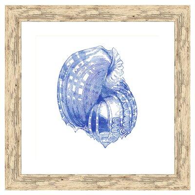 Shell II Framed Graphic Art 1-19907B