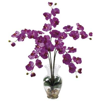 Liquid Illusion Phalaenopsis Orchid with Vase 1106-OR