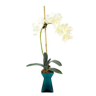 Vanda Orchid Vase WA305