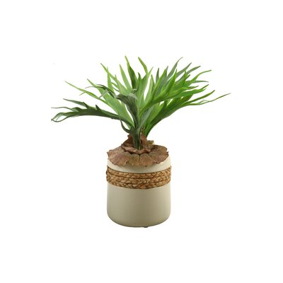 Staghorn Fern Round Ceramic Flowers in Planter