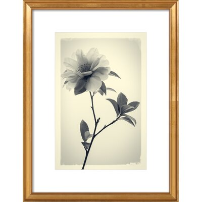 Camellia Framed Giclee Print, Artfully Walls Size: 18 H x 14 W