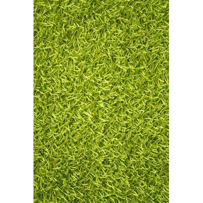 Sara Lime Green Shag Area Rug Rug Size: 8 x 11