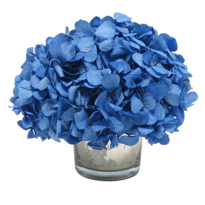 Mini Preserved Hydrangea in Vase Flower Color: Royal Blue
