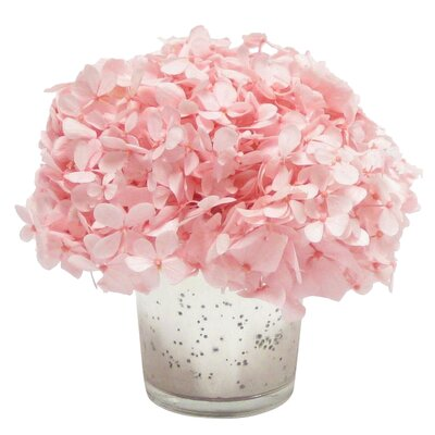 Mini Preserved Hydrangea in Vase Flower Color: Pink
