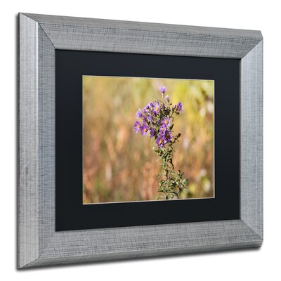 'New England Aster' by Jason Shaffer Framed Photographic Print JS0085-S1114BMF