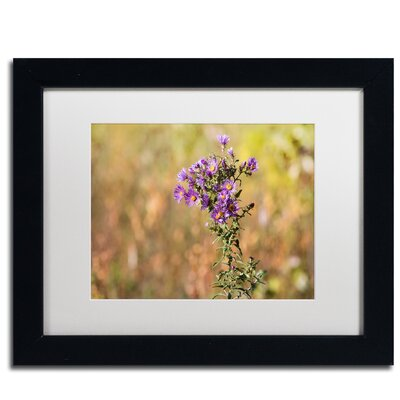 'New England Aster' by Jason Shaffer Framed Photographic Print JS0085-B1114MF