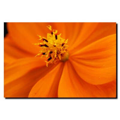 Orange Flower by Kurt Shaffer, Canvas Art - 18