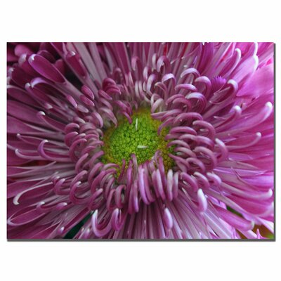 Pink Flower by Patty Tuggle, Canvas Art - 14