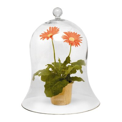 Glass Terrarium Size: Extra Large
