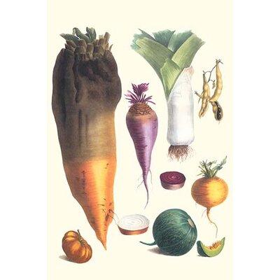 'Various Vegetables' by Philippe-Victoire Levêque De Vilmorin Graphic Art Size: 30