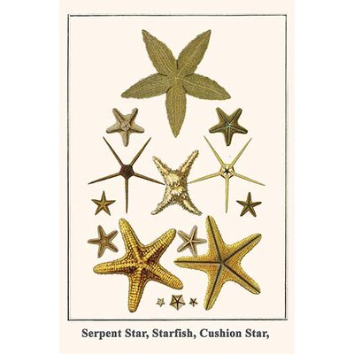 'Serpent Star Starfish Cushion Star,' by Albertus Seba Graphic Art Size: 36