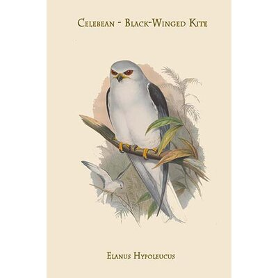 "'Elanus Hypoleucus Celebean Black-Winged Kite' by John Gould Graphic Art Size: 36"" H x 24"" W x 1.5"" D 0-587-31366-8"