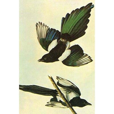 'Mallard' by John James Audubon Graphic Art Size: 28