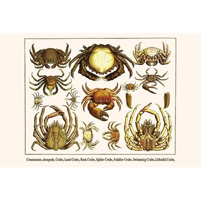 "'Crustaceans Decapods Crabs Land Crabs' by Albertus Seba Graphic Art Size: 24"" H x 36"" W x 1.5"" D 0-587-29794-8"