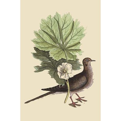 'Carolina Turtle Dove' by Catesby Catesby Painting Print Size: 36