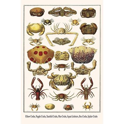 'Elbow Crabs Pepple Crabs Xanthid Crabs' by Albertus Seba Graphic Art 0-587-29793-x