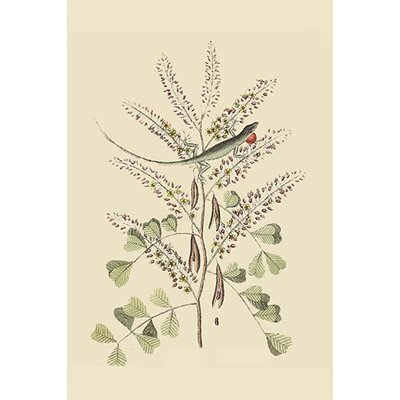'Jamaican Green Lizard' by Catesby Catesby Painting Print Size: 42