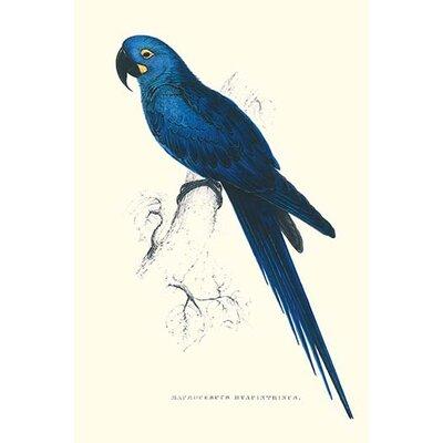 'Blue and Yellow Macaw Ara Ararauna' by Edward Lear Graphic Art 0-587-28657-1C2436